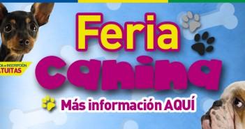 Slide Feria canina